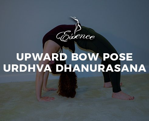 Upward Bow Pose Urdhva Dhanurasana