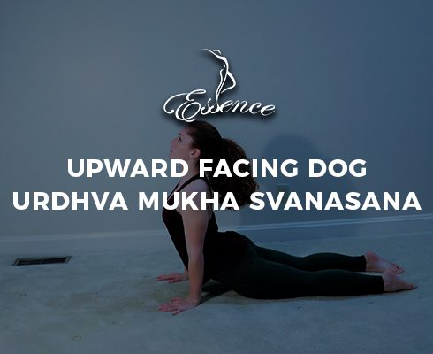 Upward Facing Dog Urdhva Mukha Svanasana